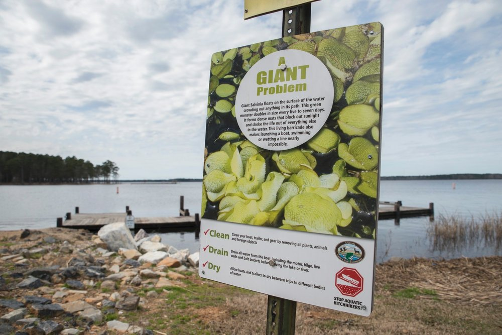 A sign at Lake Columbia's South Shore Landing indicates the dangers of Giant Salvinia, if it were ever to be transported to the Magnolia water source.