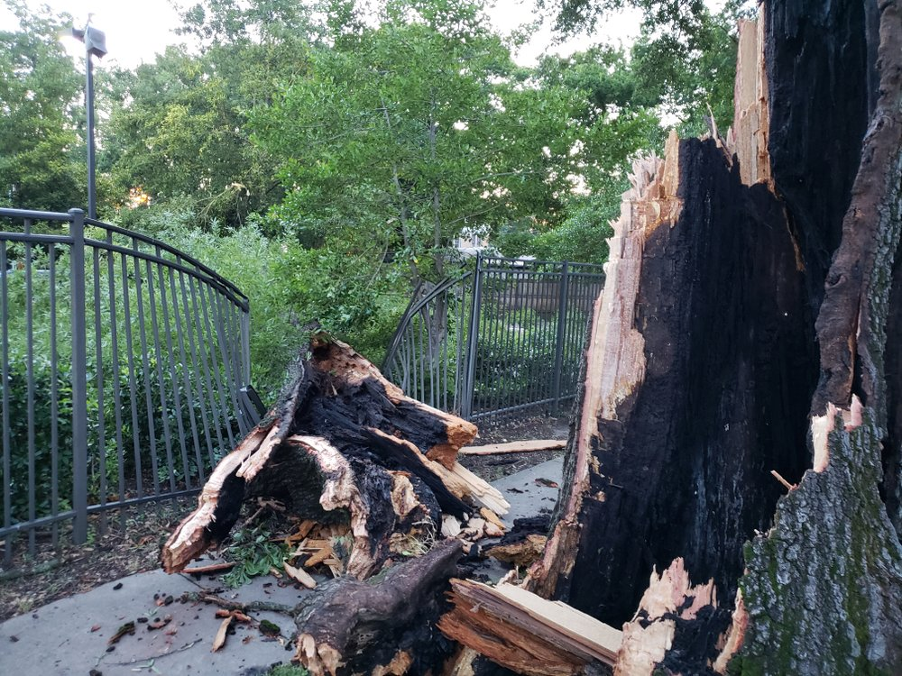A large tree fell through a fence at an apartment complex along Sixth Street near Sherman Street in downtown Little Rock.