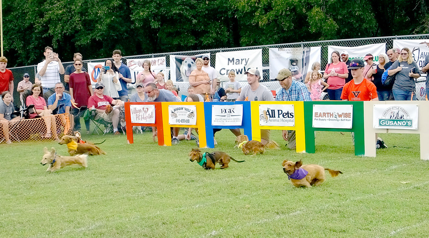 Weiner Dog Race Returns