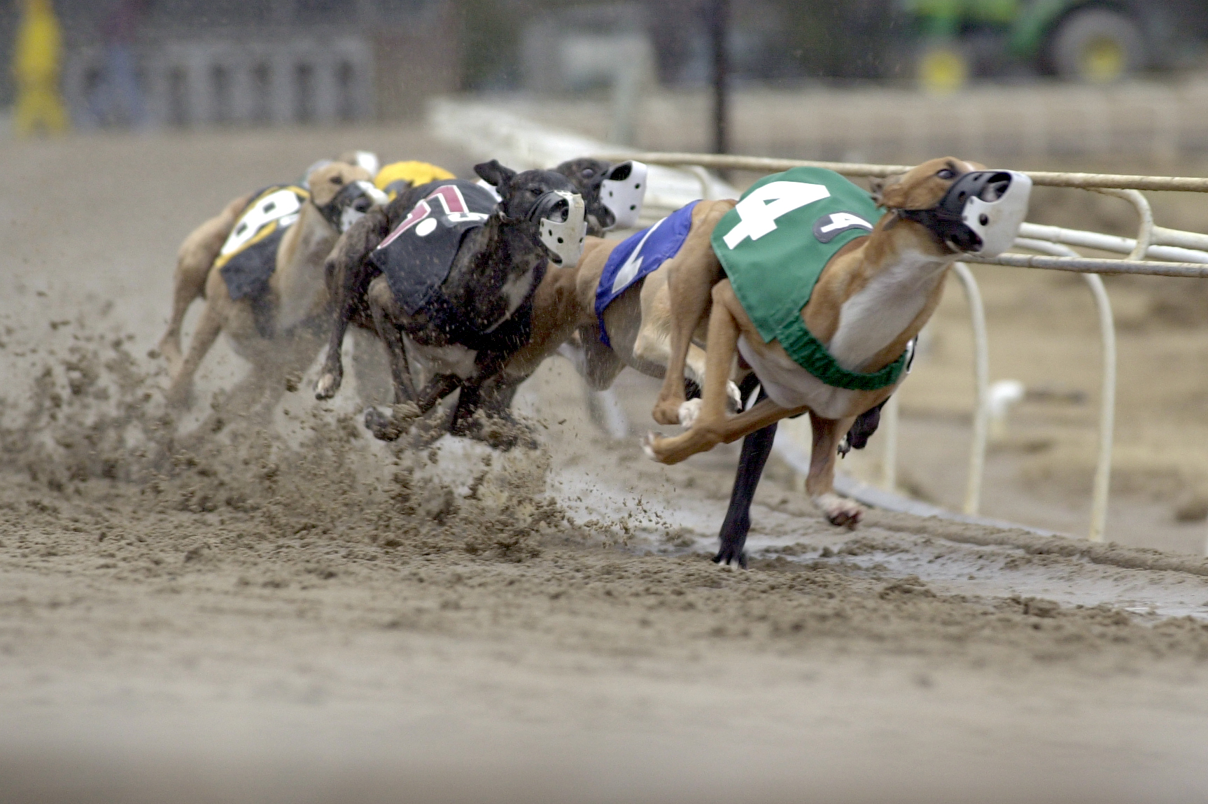 Dog racing betting games for golf texas oklahoma line betting explained