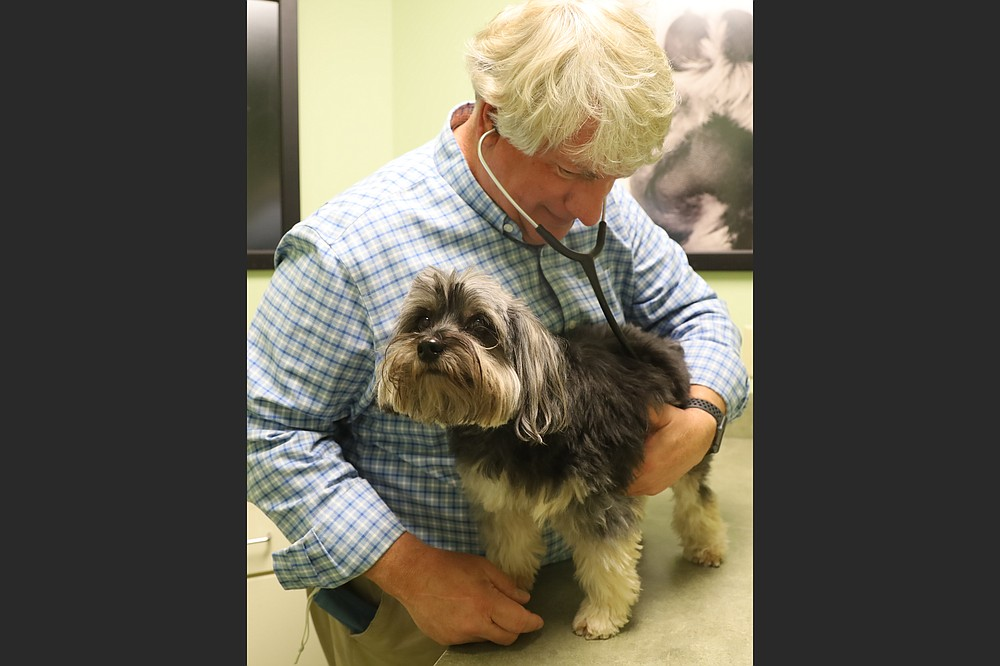 Tim Paladino, VMD, doesn't see many roundworm-infested animals at Allpets Animal Hospital in Little Rock because his patrons give their pets parasite-preventing treatments. (Special to the Democrat-Gazette/Dwain Hebda)