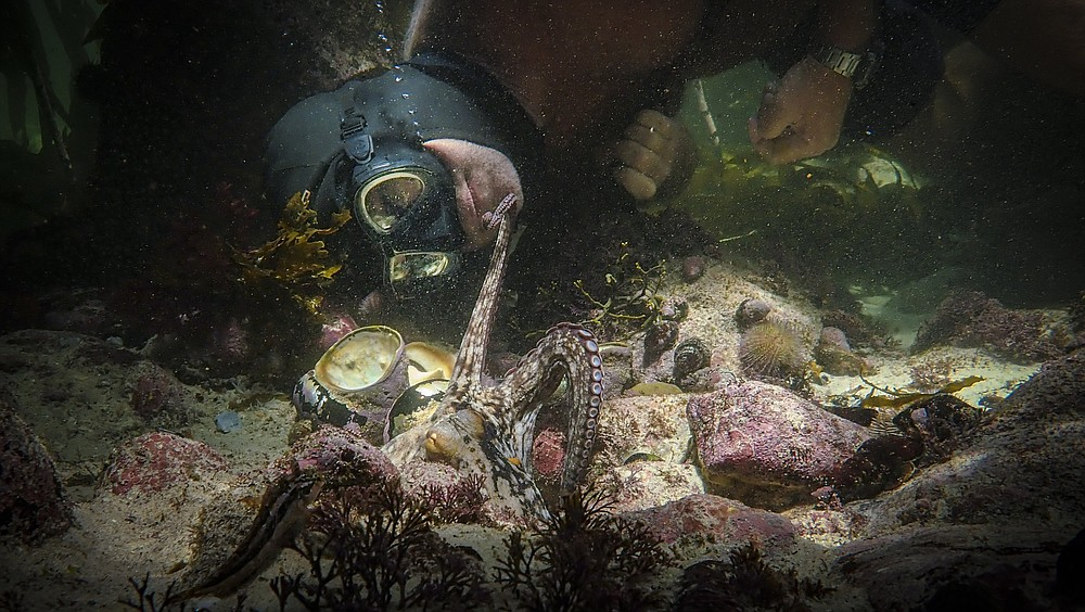 """Craig Foster interacts with an octopus in a scene from the documentary """"My Octopus Teacher."""" The graceful octopod extended her tentacles to make connections that seemed achingly poignant in a time when mere hugs between humans are taboo. (Netflix via AP)"""