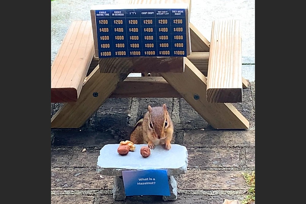 Angela Hansberger says the chipmunk she feeds would do anything for a hazelnut. She created a Jeopardy-inspired scene featuring his favorite nut. (Photo courtesy Angela Hansberger)