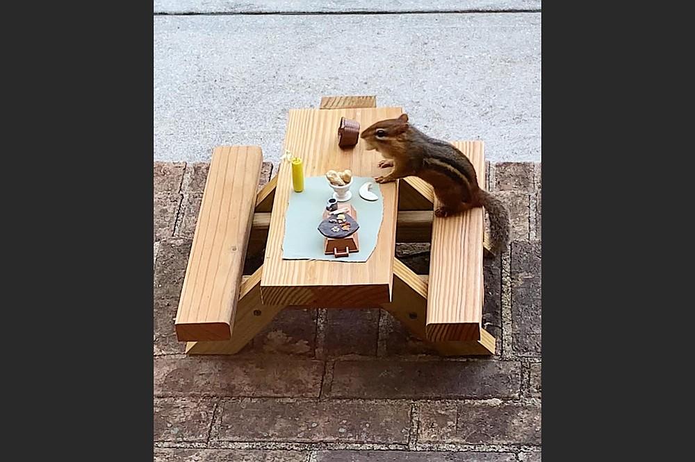 "Thelonious Munk eats his ""sushi"" dinner. (Photo courtesy Angela Hansberger)"