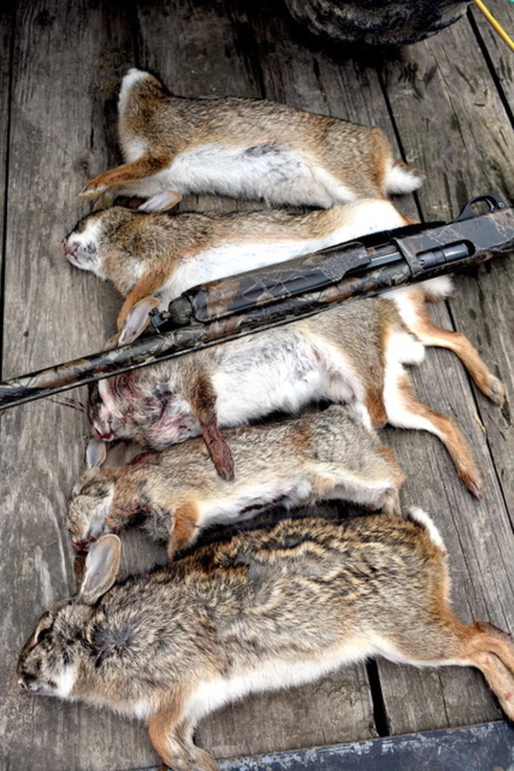 Excellent dog work helped deliver several swamp rabbits and one cottontail during the Prairie County hunt.