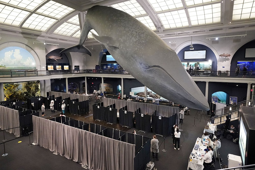 Vaccination cubicles were set up Friday under the 94-foot-long, 21,000-pound model of a blue whale in the Milstein Family Hall of Ocean Life at the American Museum of Natural History in New York. (AP/Richard Drew)