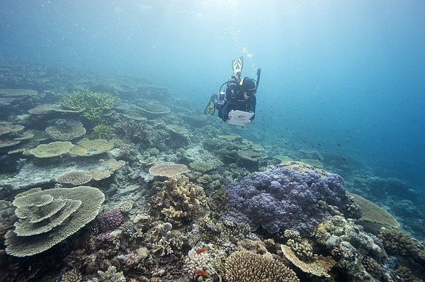 Status debate delayed for Great Barrier Reef