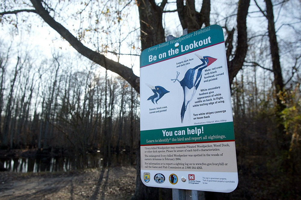 A sign at an entrance to the Benson Creek Natural Area near Brinkley in late December 2005 asks hikers to be on the lookout for ivory-billed woodpeckers. (Democrat-Gazette file photo)