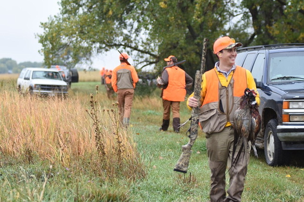 A good pheasant hunt provides ample shooting opportunities for everyone. Take note of how birds fly and stay close to the dogs. (Arkansas Democrat-Gazette/Bryan Hendricks)
