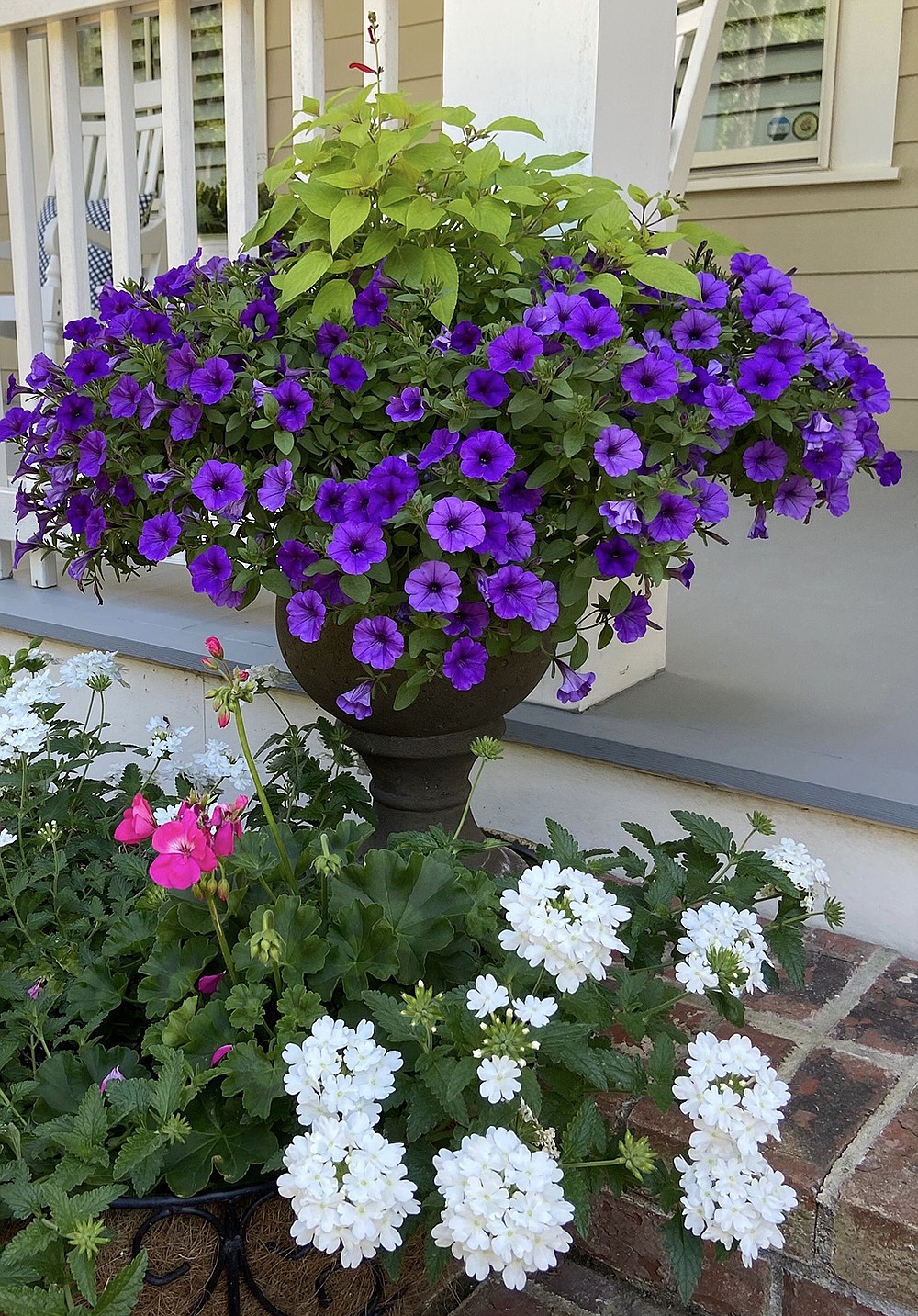 Supertunia Mini Vista Indigo petunia and Rockin Golden Delicious pineapple sage wow with Superbena Whiteout verbena blooming below. (TNS/Norman Winter)
