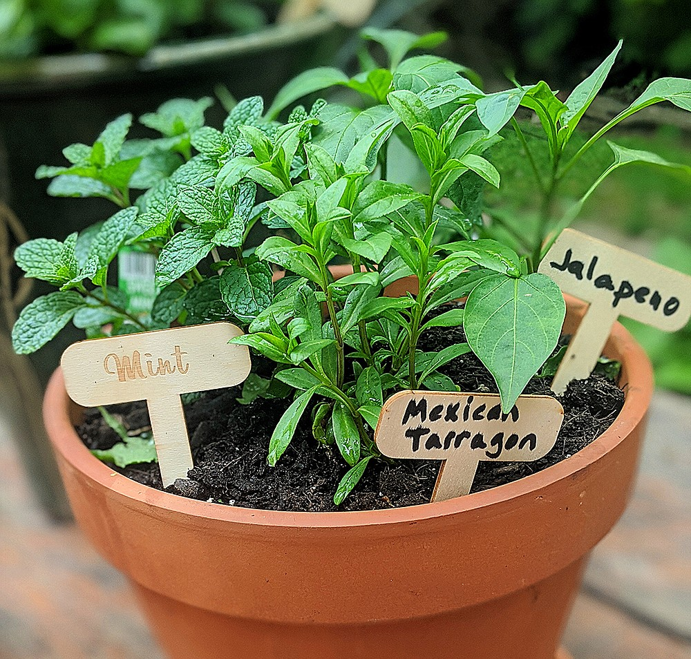 A Mexican herb garden offers fresh seasonings at the ready. (Pittsburgh Post-Gazette/TNS/Gretchen McKay)
