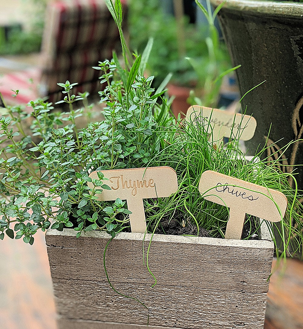 Chives, thyme and lavender are popular herbs in a French herb garden.  (Pittsburgh Post-Gazette/TNS/Gretchen McKay)