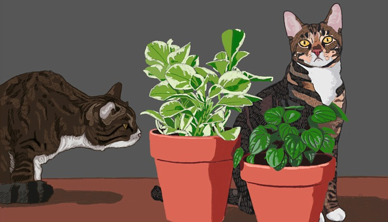 Cat-Safe Plants