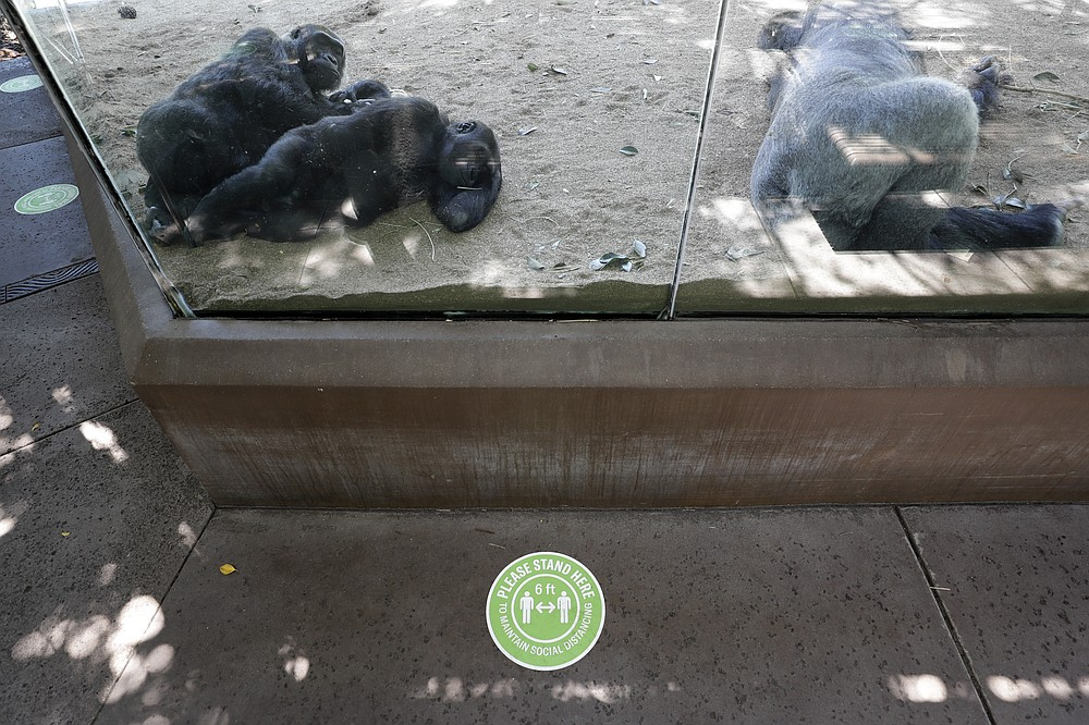 Gorillas rest in their enclosure as a sign on the asks visitors to maintain social distancing before the reopening of the San Diego Zoo, Thursday, June 11, 2020, in San Diego. California's tourism industry is gearing back up with the state giving counties the green light to allow hotels, zoos, aquariums, wine tasting rooms and museums to reopen Friday. (AP Photo/Gregory Bull)