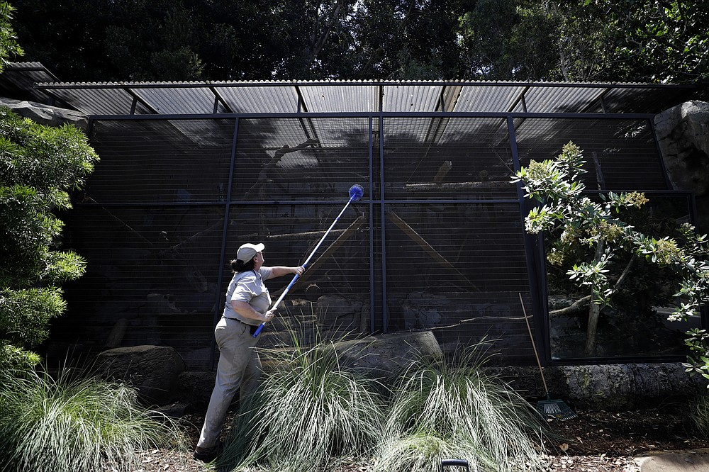 Victoria Girdler, a senior wildlife care specialist at the San Diego Zoo, clears off cobwebs from honey badger enclosure Thursday, June 11, 2020, in San Diego. California's tourism industry is gearing back up with the state giving counties the green light to allow hotels, zoos, aquariums, wine tasting rooms and museums to reopen Friday. (AP Photo/Gregory Bull)