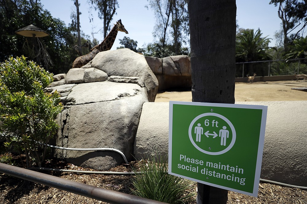 A giraffe looks on behind a sign asking visitors to maintain social distancing before the reopening of the San Diego Zoo, Thursday, June 11, 2020, in San Diego. California's tourism industry is gearing back up with the state giving counties the green light to allow hotels, zoos, aquariums, wine tasting rooms and museums to reopen Friday. (AP Photo/Gregory Bull)