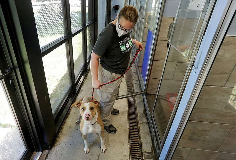 Many Animals In Northwest Arkansas Finding Homes During Pandemic Bypassing Shelters