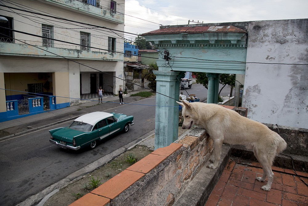 A pet dog watches a few cars go by from the roof of a building in the Cerro neighborhood, during a lockdown to curb the spread of COVID-19, in Havana, Cuba, Friday, June 19, 2020. Nearly three months of a near-total shutdown of commerce, transportation, and public spaces, combined with health monitoring and virus testing has led to the virtual elimination of COVID-19 in Cuba.  (AP Photo/Ismael Francisco)