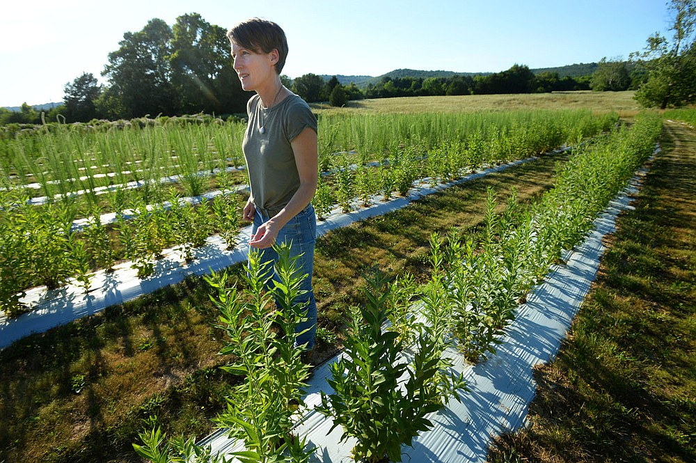 Jennifer Ogle checks on rows of native flowering plants Thursday, June 25, 2020, at a farm in Fayetteville that is participating in the Arkansas Native Seed Program. The program is a collaboration of several state, federal, and nonprofit partners who are working to create a native seed industry for the state. The goal is to create a local infrastructure capable of producing large amounts of native seed that can be used in wildlife habitat restoration efforts statewide. Visit nwaonline.com/200626Daily/ for today's photo gallery. (NWA Democrat-Gazette/Andy Shupe)
