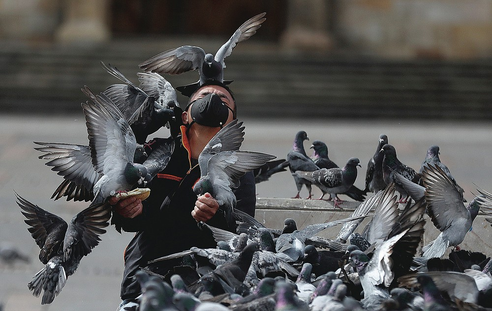 A man wears a protective face mask as he feeds a flock of pigeons at Bolivar Square in Bogota, Colombia on July 21, 2020. (AP Photo/Fernando Vergara)