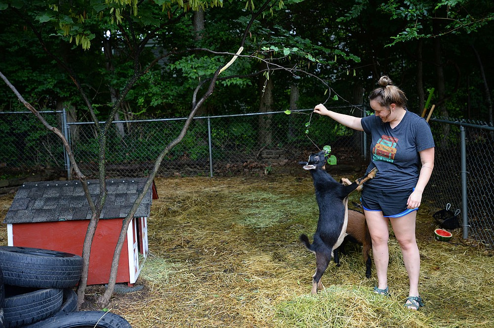 Abbey Allen plays with her goats, Professor (left), and Dilly, Friday, July 31, 2020, at her home on Olive Avenue in Fayetteville. A newly adopted ordinance allows for goats in the city limits on less land than earlier requirements. Visit nwaonline.com/200803Daily/ for today's photo gallery. (NWA Democrat-Gazette/Andy Shupe)