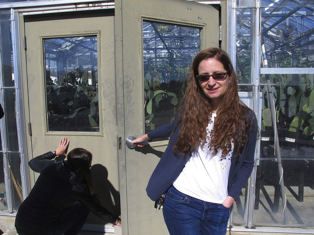 FILE - In this Feb. 10, 2020 file photo, Beth Leger, a plant ecologist at the University of Nevada, Reno, opens the door to a campus greenhouse where she and graduate assistant Jamey McClinton, left, are growing Tiehm's buckwheat in Reno, Nevada. Leger, a botanist hired by a company planning to mine one of the most promising deposits of lithium in the world, believes a rare desert wildflower at the Nevada site should be protected under the Endangered Species Act, a move that could jeopardize the project, new documents show. (AP Photo/Scott Sonner, File)