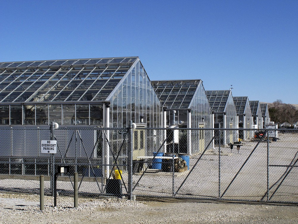 FILE - In this Feb. 10, 2020, file photo, a series of greenhouses are pictured at the University of Nevada, Reno, where a rare desert wildflower is growing. The U.S. Fish and Wildlife Service says there's enough scientific evidence that two rare plants in Nevada's desert could go extinct to warrant a year-long review of whether to list them as U.S. endangered species, including one at the center of a fight over a proposed lithium mine. (AP Photo/Scott Sonner, File)