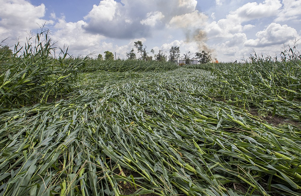 The path of a possible tornado is evident in a cornfield after a powerful storm on Tuesday, Aug. 11, 2020, in Wakarusa, Ind. (Robert Franklin/South Bend Tribune via AP)