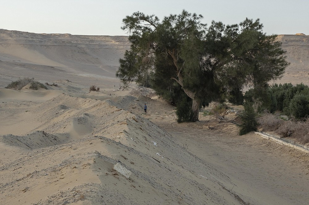A man stands near a tree on a land that was once fertile and green, in Second Village, Qouta town, Fayoum, Egypt, Saturday, Aug. 8, 2020. Second Village, was one of multiple agricultural communities created in Egypt in the 1960s by the socialist government of President Gamal Abdel-Nasser. Built on reclaimed desert, it depends for irrigation on the Yusuf Canal, which flows from the Nile through Fayoum, fanning out in a series of channels. The villagers enumerated the variety of crops they used to farm, ranging from cotton and vegetables to wheats and grains. (AP Photo/Nariman El-Mofty)