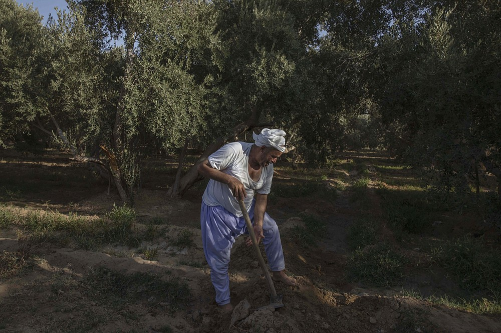 "55-year-old Egyptian farmer Makhluf Abu Kassem, plows his land that is drying up, in Second Village, Qouta town, Fayoum, Egypt, Saturday, Aug. 8, 2020. Abu Kassem fears that a dam Ethiopia is building on the Blue Nile, the Nile's main tributary, could add to the severe water shortages already hitting his village if no deal is struck to ensure a continued flow of water. ""The dam means our death,"" he said. (AP Photo/Nariman El-Mofty)"