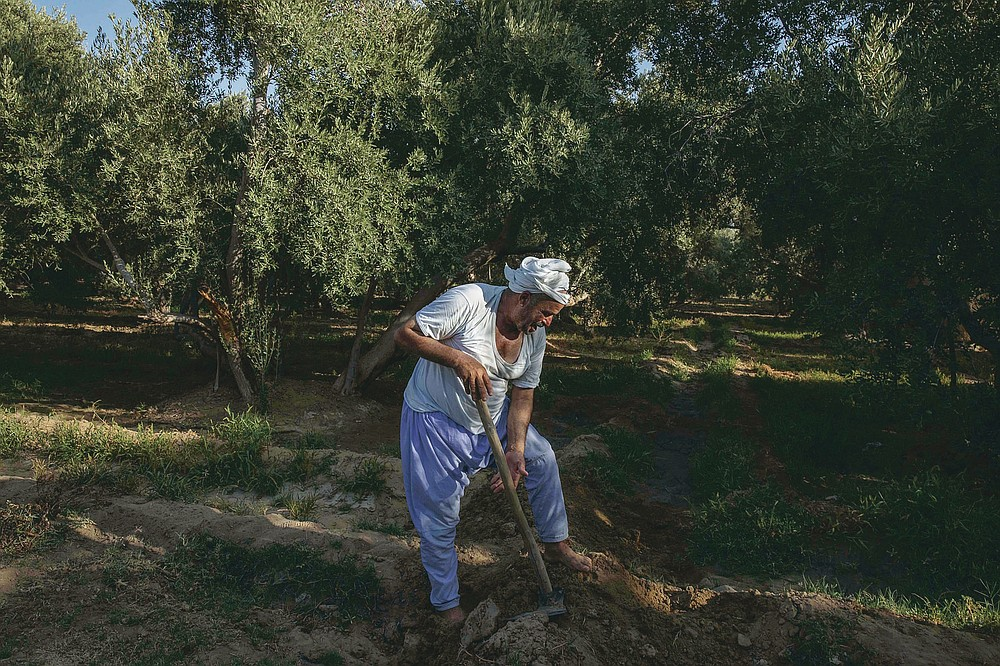 """55-year-old Egyptian farmer Makhluf Abu Kassem, plows his land that is drying up, in Second Village, Qouta town, Fayoum, Egypt, Saturday, Aug. 8, 2020. Abu Kassem fears that a dam Ethiopia is building on the Blue Nile, the Nile's main tributary, could add to the severe water shortages already hitting his village if no deal is struck to ensure a continued flow of water. """"The dam means our death,"""" he said. (AP Photo/Nariman El-Mofty)"""