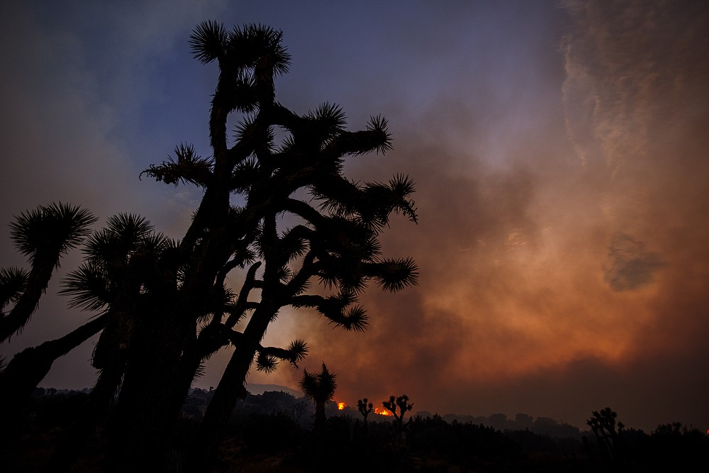 Smoke rises from the Bobcat Fire in Juniper Hills, Calif., Friday, Sept. 18, 2020, with Joshua trees silhouetted. (AP Photo/Ringo H.W. Chiu)