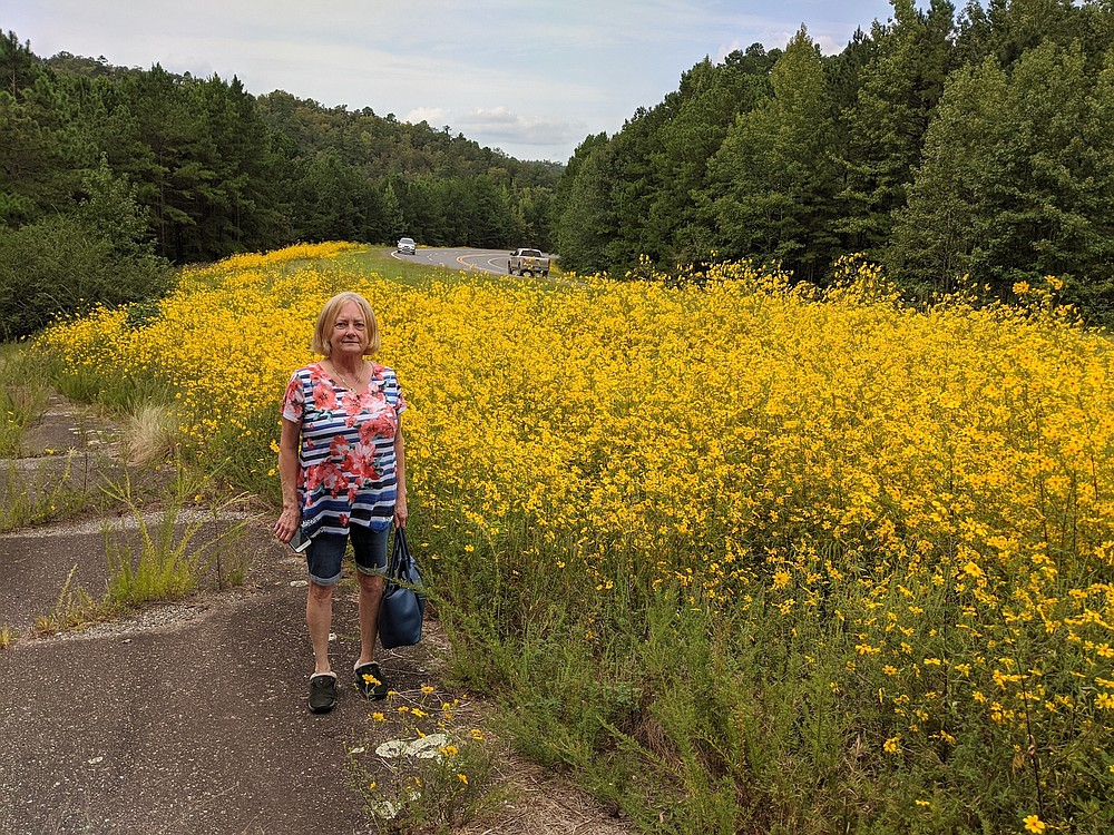 An unidentified reader poses with an impressive stand of Bidens aristosa on an Arkansas roadside.  (Special to the Democrat-Gazette)