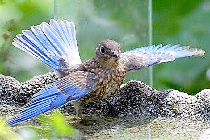 Sharla Miller was awarded fifth place in the Bluebird Photograpy contest.