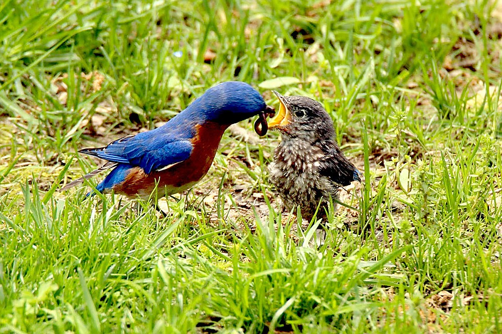 Debbie Raspberry was awarded third place in the Bluebird Photograpy contest.