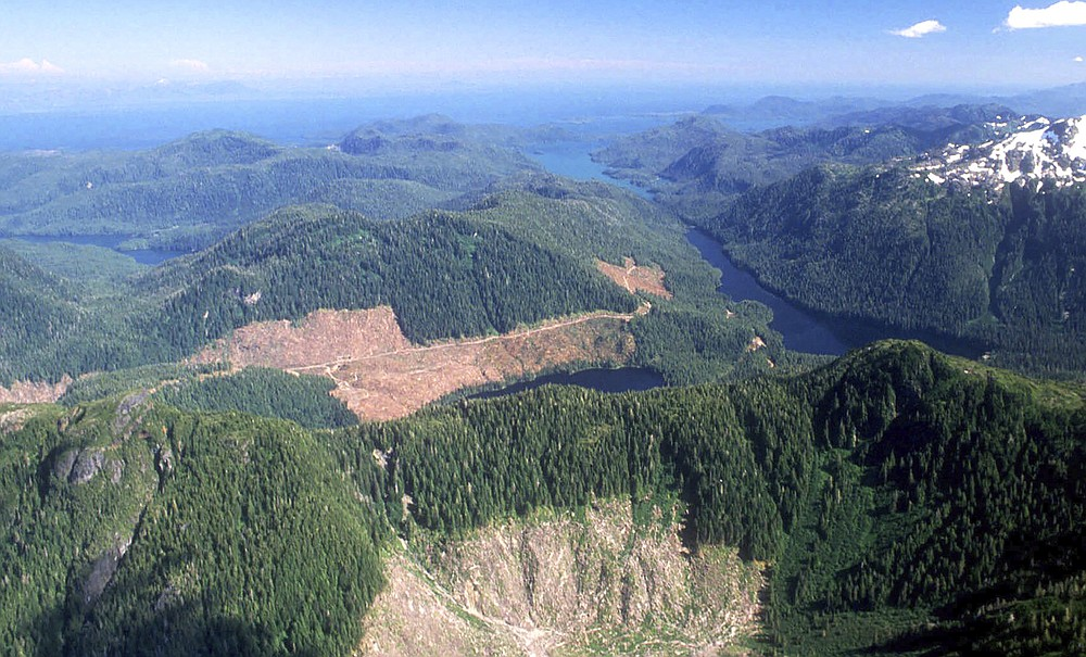 FILE - This 1990 aerial file photo, shows a section of the Tongass National Forest in Alaska that has patches of bare land where clear-cutting has occurred. The U.S. Forest Service announced plans Wednesday, Oct. 28, 2020, to lift restrictions on road building and logging in Tongass National Forest, a largely pristine rainforest in southeast Alaska that provides habitat for wolves, bears and salmon. Conservation groups vowed to fight the decision. (Hall Anderson/Ketchikan Daily News via AP, File)