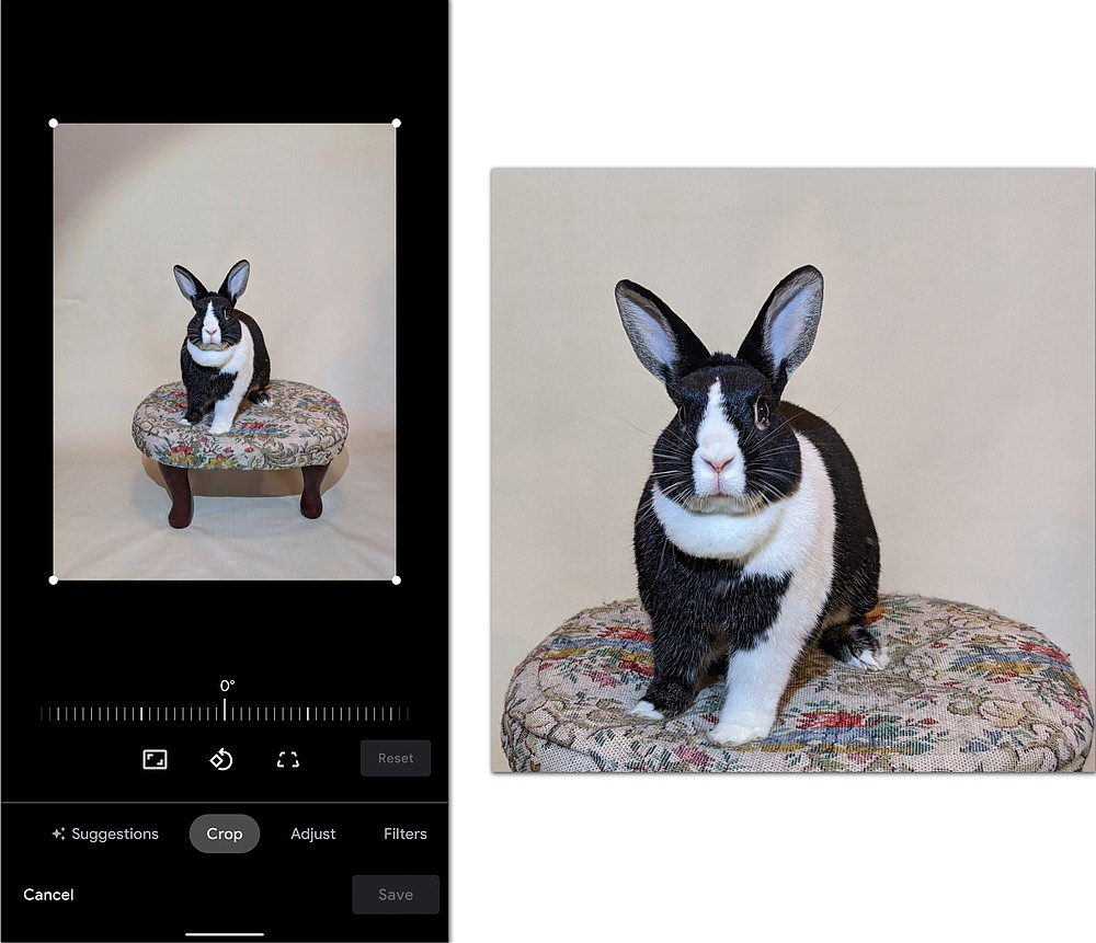 Using your smartphone's cropping tool can make your homemade pet portraits look more professional.  (The New York Times/J.D. Biersdorfer)