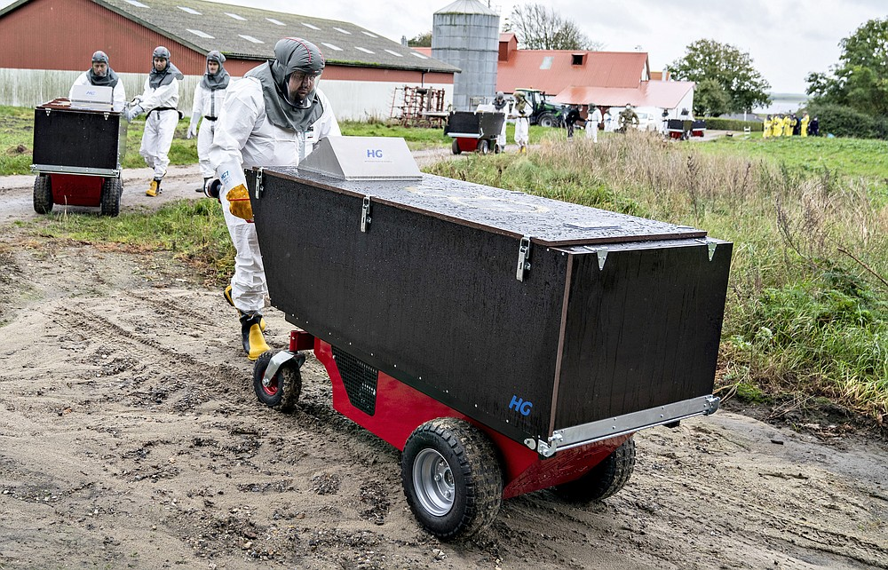 Employees from the Danish Veterinary and Food Administration and the Danish Emergency Management Agency transport contatiner at a mink farm, in Gjoel, Denmark, Thursday, Oct. 8, 2020.  The culling of at least 2.5 million minks in northern Denmark has started, authorities said Monday after the coronavirus has been reported in at least 63 farms. The Danish Veterinary and Food Administration is handling the culling of the infected animals while breeders who have non-infected animals on a farm within 8 kilometers (5 miles) from an infected farm must put them to sleep themselves.   (Henning Bagger Ritzau Scanpix via AP)