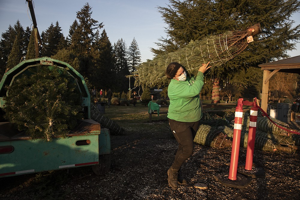 Madison Irving, an employee at Lee farms carries a freshly cut Christmas tree for a client on Saturday, Nov. 21, 2020 in Tualatin, Ore. It's early in the season, but both wholesale tree farmers and small cut-your-own lots are reporting strong demand, with many opening well before Thanksgiving. (AP Photo/Paula Bronstein)