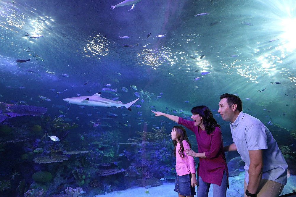 The Grand Aquarium houses everything from sharks and rays to small damselfish and wrasses, Bitter says. (Courtesy Photo)