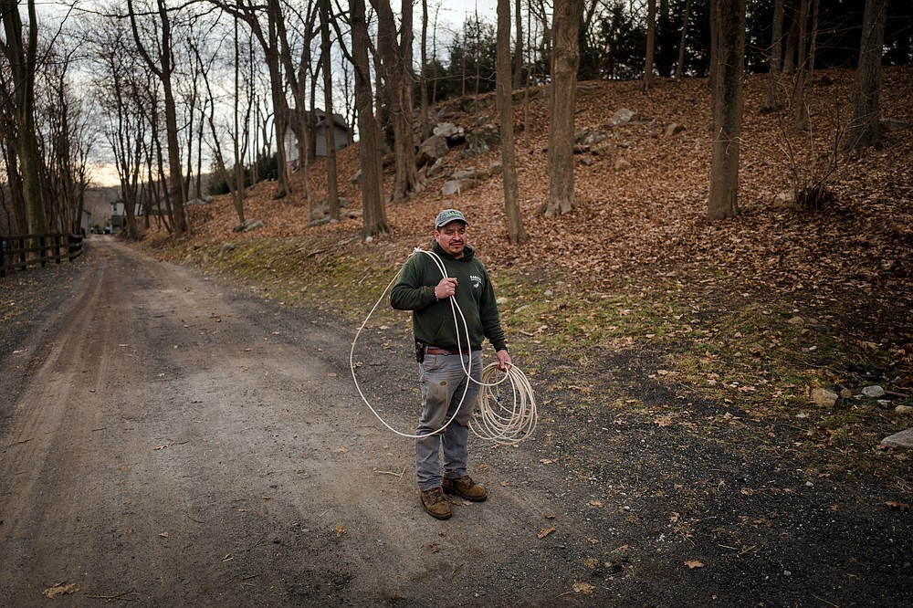 Leo Garcia at a private farm in Bedford Corners, N.Y., Dec. 30,. 2020. Garcia was able to lasso Sandman, one of two escaped llama's, but not Gizmo. (Ryan Christopher Jones/The New York Times)