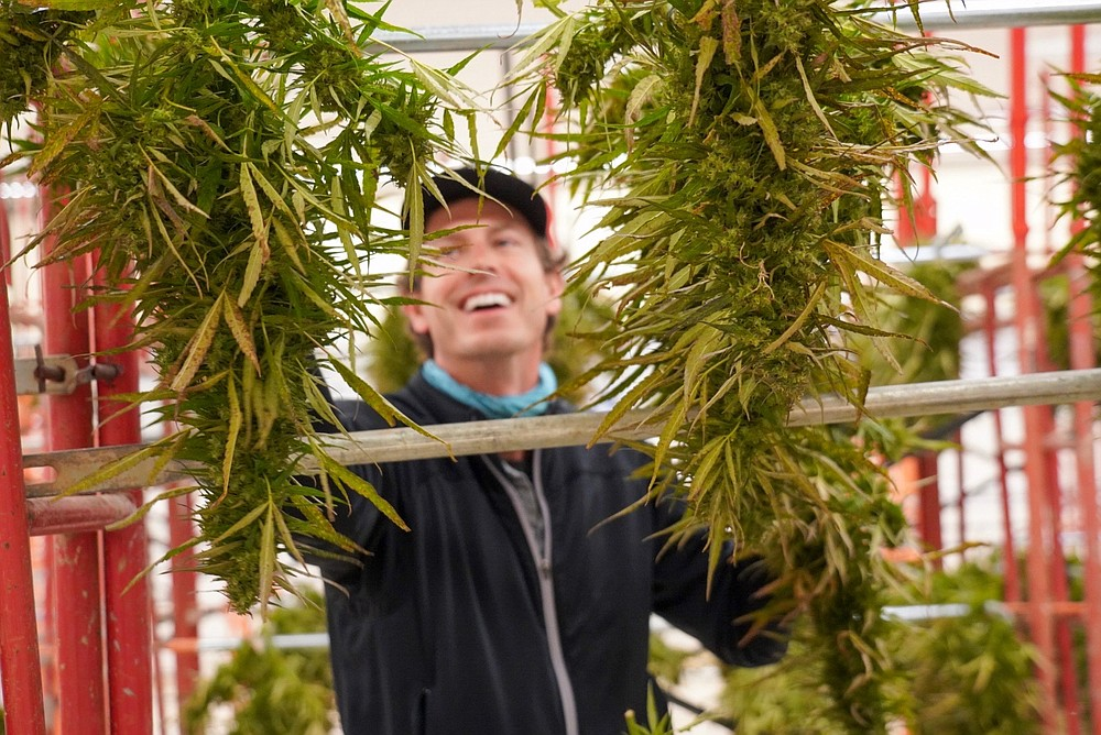 Eric Thornton, co-owner of Good Day Farm, is shown at a cannabis facility. Statewide sales could reach $365 million this year. (Special to The Commercial)