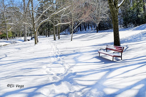 A bench in Hot Springs National Park is covered in snow. Photograph is courtesy of Eli Vega. - Submitted photo