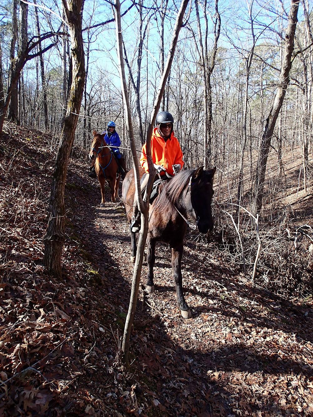 Horses and riders make their way along the War Eagle Valley Loop near the Townsend Ridge Road trailhead. (NWA Democrat-Gazette/Flip Putthoff)