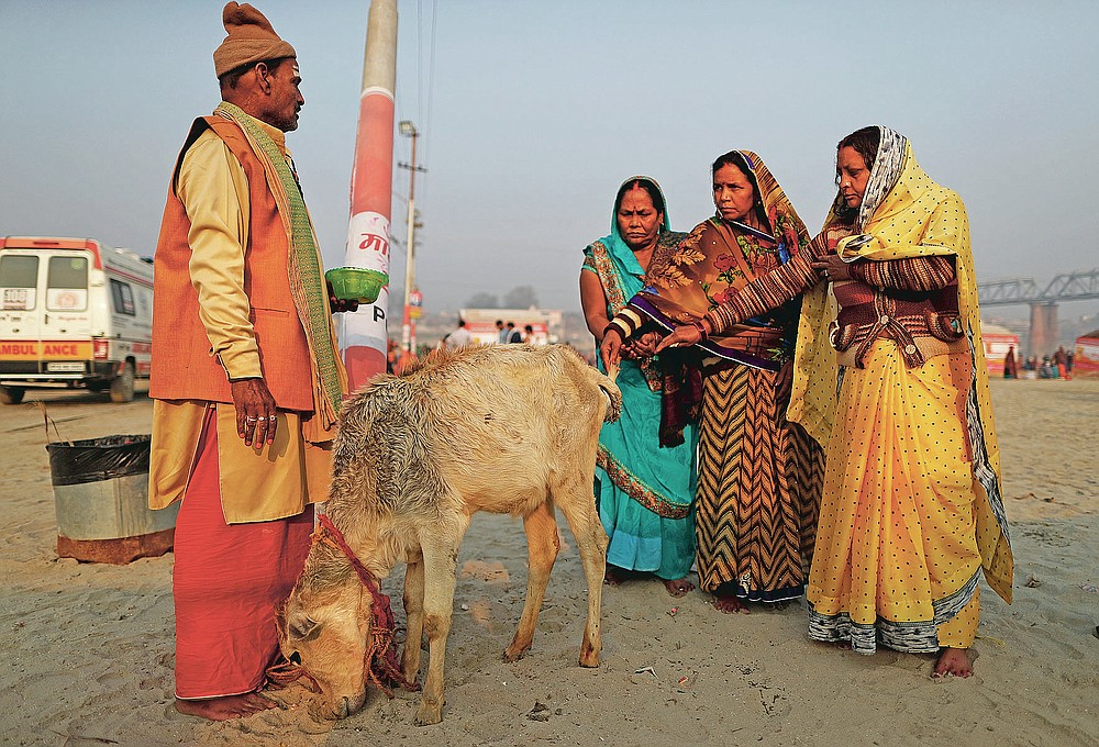 Women devotees pray to a calf after a holy dip at Sangam during Magh mela festival, in Prayagraj, India. Friday, Feb. 19, 2021.  Millions of people have joined a 45-day long Hindu bathing festival in this northern Indian city, where devotees take a holy dip at Sangam, the sacred confluence of the rivers Ganga, Yamuna and the mythical Saraswati. Here, they bathe on certain days considered to be auspicious in the belief that they be cleansed of all sins. (AP Photo/Rajesh Kumar Singh)