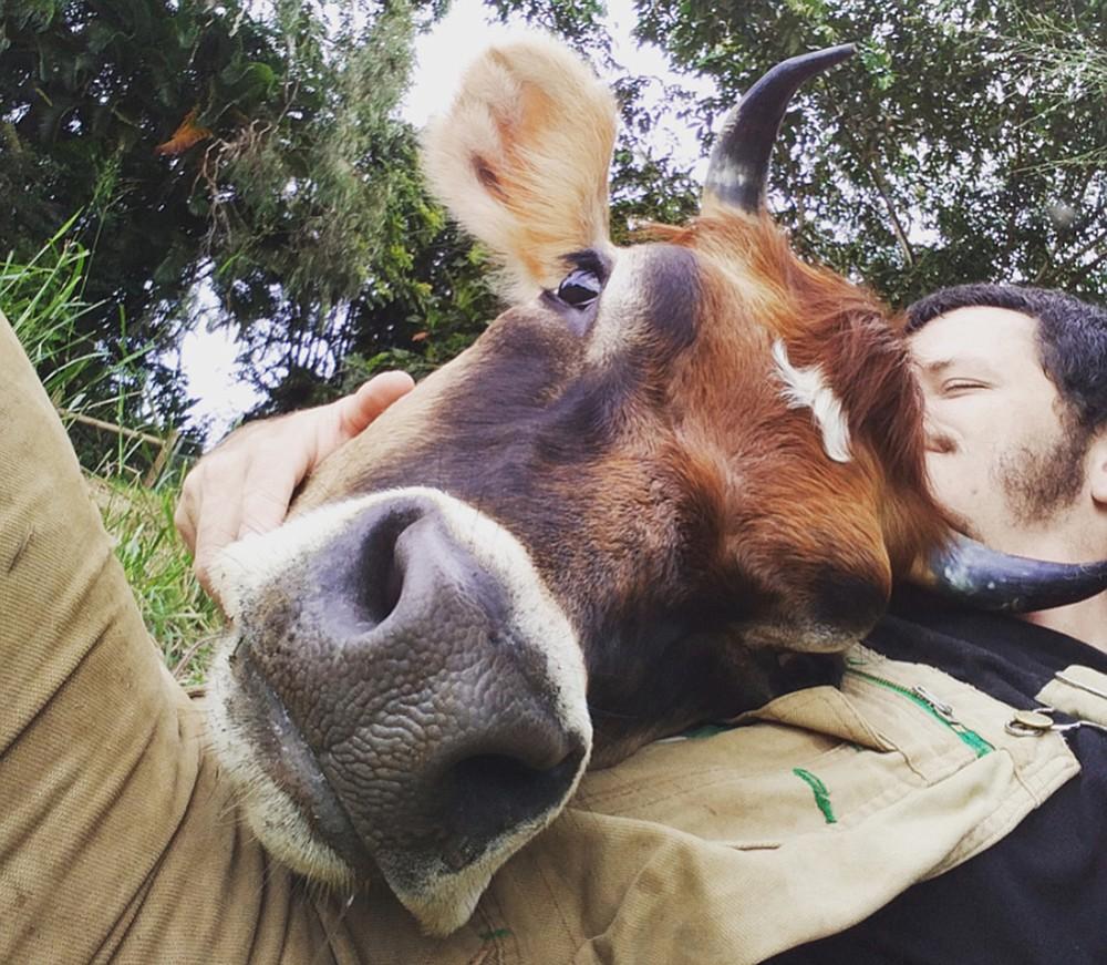 James Higgins, who runs the Krishna Cow Sanctuary in Hawaii, cuddles with Uma. (Photo courtesy of Krishna Cow Sanctuary)