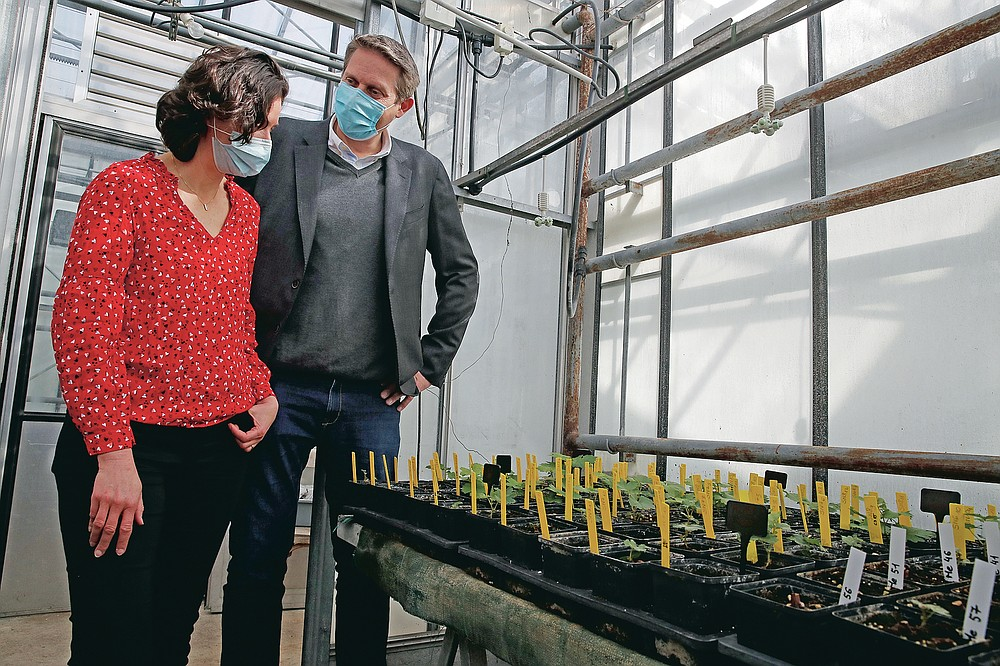 Stephanie Cluzet, Head of Vine Researcher at the Institute for Wine and Vine Research, left, speaks with Nicolas Gaume, CEO and co-founder Space Cargo Unlimited next to snippets of grapevines, with yellow markers, that spent a year orbiting the world in the International Space Station at the ISVV Institute for wine and vine research in Villenave-d'Ornon, southwestern France, Monday, March 1, 2021. Researchers in Bordeaux are carefully studying a dozen bottles of French wine that returned to Earth after a stay aboard the International Space Station. They're releasing preliminary results Wednesday, March 24, 2021. At a one-of-a-kind tasting this month, 12 connoisseurs sampled one of the space-traveled wines, blindly tasting it alongside a bottle from the same vintage that had stayed in a cellar.  (AP Photo/Christophe Ena)