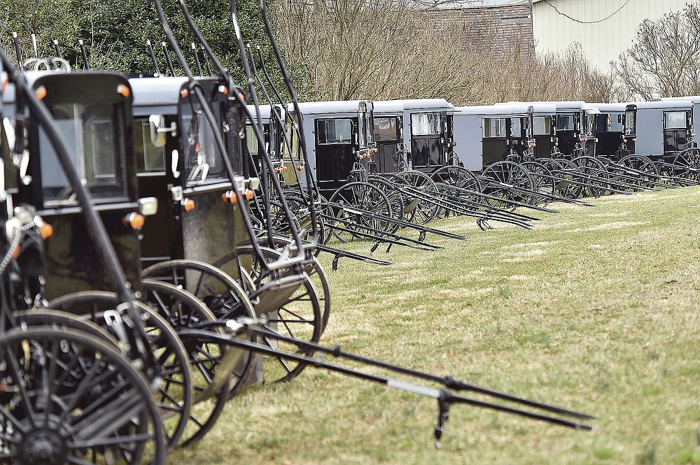 Amish buggies are parked at a home along the New Holland Road south of New Holland for a wedding celebration on March 17, 2020. The administrator of a medical center in the heart of the Amish community in New Holland Borough estimates as many as 90% of Plain families have since had at least one family member infected with COVID-19, and that this religious enclave achieved what no other community in the United States has: herd immunity.  (Suzette Wenger/LNP/LancasterOnline via AP)