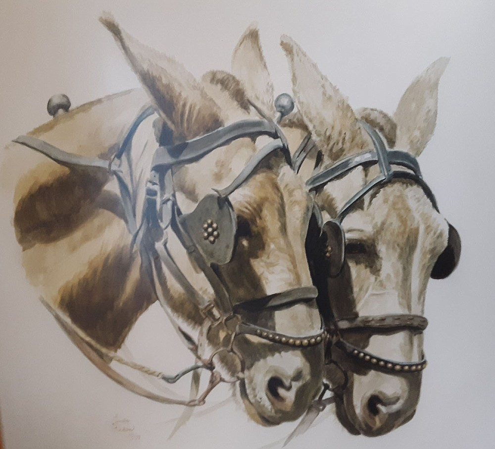 In 1966, John Cooper Sr. bought a team of mules in south Arkansas to pull a western-style wagon from Arkla Village to Bella Vista, creating publicity for the new Northwest Arkansas retirement community. The mule team, which hauled visitors around the village in 1966-67, was sketched by Linda Pickens about 1979.  (Courtesy image)