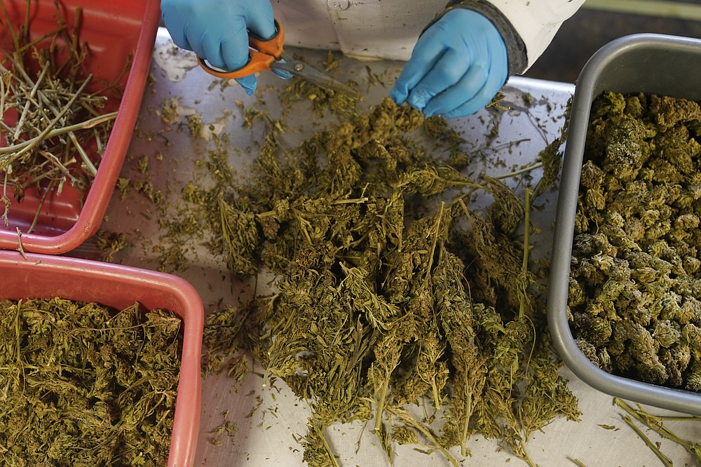 Dried hemp plants are sorted and trimmed at Hepworth Farms in Milton, N.Y., Monday, April 12, 2021. Last month, New York became the second-largest state to legalize recreational marijuana after California, with retail sales expected to begin as early as next year. (AP Photo/Seth Wenig)